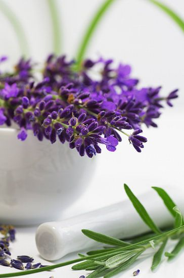 Lavender Herb Kitchen