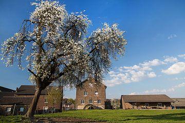 Bloesempracht sur Wim Roebroek