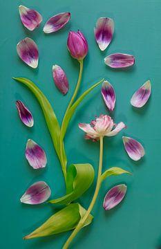 Stillleben mit Tulpen von Anette Jäger