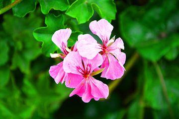 prachtige bloem von Gerrit Neuteboom