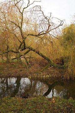 kralingse bos Rotterdam