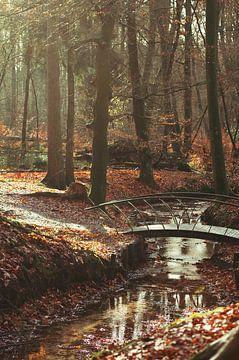 Herfst in het bos van Nancy van Verseveld