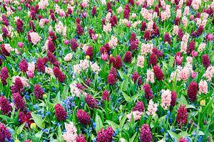 Hyacinten tulpen en blauwe druifjes  van