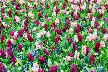 Hyacinten tulpen en blauwe druifjes  von Dennis van de Water