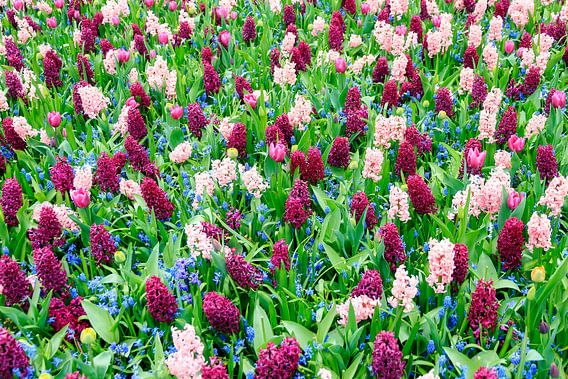 Hyacinten tulpen en blauwe druifjes  van Dennis van de Water