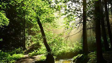 Idyllische zonsopgang in een bos met een beekje in een idyllische zonsopgang van Günter Albers