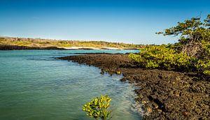 Zeekust van de Galapagos