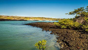 Zeekust van de Galapagos van René Holtslag
