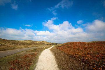 De nederlandse duinen prachtige kleurrijke natuur foto op canvas in duingebied van