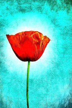 Eine Mohnblume von Alexandra Kleist