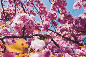 Rosafarbene Blüte von Mandy Jonen