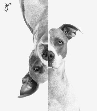 Weerspiegelende hond van Martina Fagel