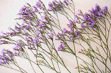 Paarse bloemen van Diana Mets