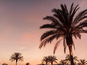 Palmbomen op Ibiza tijdens prachtige zonsondergang op Ibiza van Youri Claessens