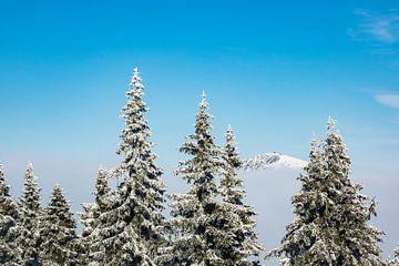 Winter im Riesengebirge in der Tschechische Republik von Rico Ködder