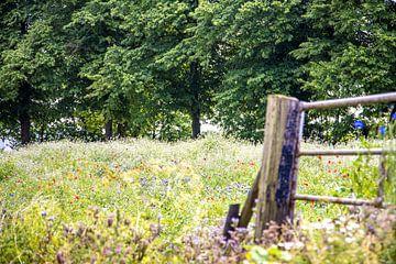 Feld mit Wildblumen von Nicky Kapel