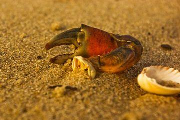 Reste einer Krabbenschere und eine halbe Muschel von Norbert Sülzner