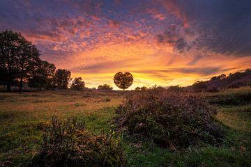 Mit Liebe aus den Niederlanden von Martin Podt