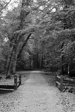 Ein Waldweg mit einer schwarz-weißen Brücke von Gerard de Zwaan