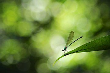 Waterjuffer in een tropisch regenwoud sur