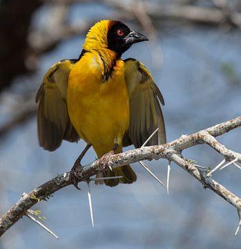 yellow bird sur Anne-Marie Vermaat