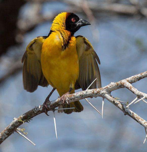 yellow bird van Anne-Marie Vermaat