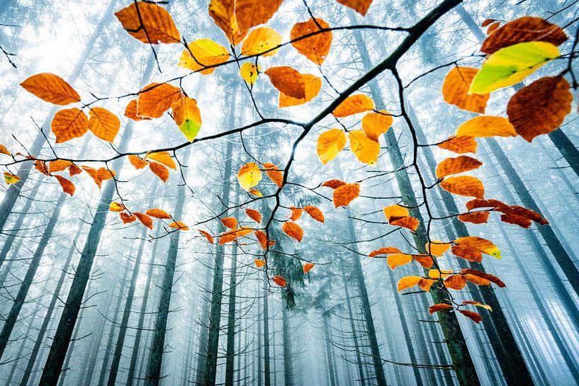 Herfst! van Sam Mannaerts Natuurfotografie