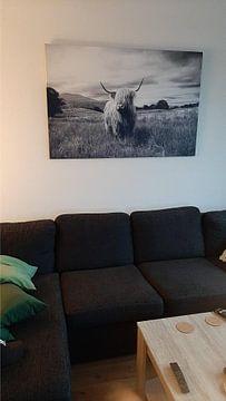 Photo de nos clients: Highlander – Schottisches Hochlandrind sur Marly Tijhaar
