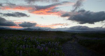 Sunrise landscape sur Jip van Bodegom