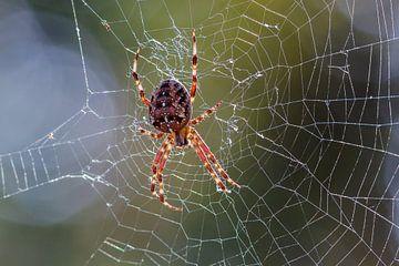 de spin van Rolf Pötsch