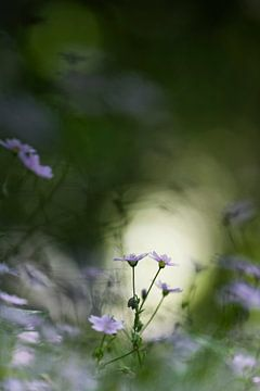 Kleine Blumen im Wald von Bob Daalder
