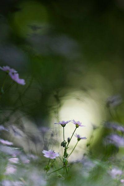 Little flowers in the wood van Bob Daalder