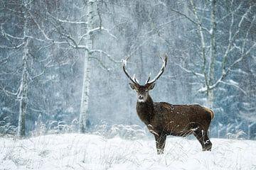 stiller Moment im wilden Schneetreiben von
