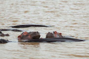 Happy Hippos van Leon van Voornveld