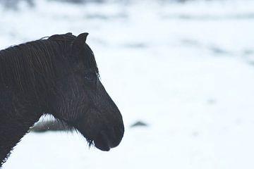 Ijslander in ijsland van AJ Zuidema