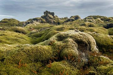 Trollenveld in Ijsland van René Wolters