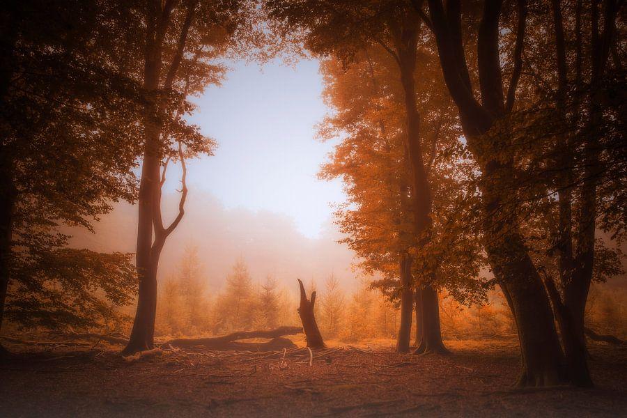 Autumn forest mood van Erwin Stevens