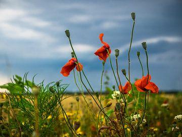 Wilde bloemen van Martijn Tilroe