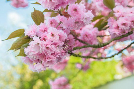 Bloemen boom  van Vera  Vink