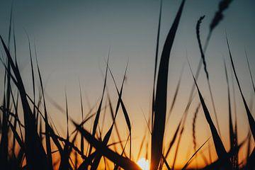Sonnenuntergang von Maikel Schrama