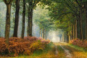Dromen in het Liesbos.... van Jos Erkamp