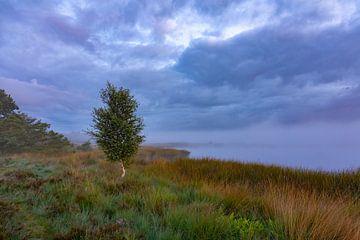 Birke im Nebel von Anneke Hooijer