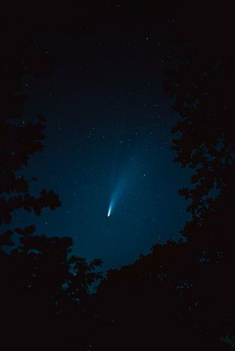 Neowise am Nachthimmel durch die Baumkronen gesehen