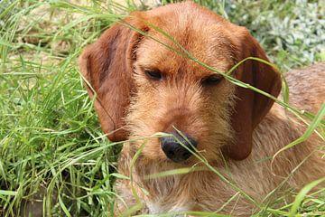 Klein lief jong hondje van