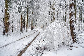Winterbos van Uwe Ulrich Grün