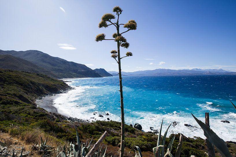 Middellandse Zee, Corsica, Frankrijk van Rosanne Langenberg