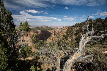 Grand Canyon in het bijzonder van Hans Jansen