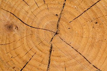 doorsnede van boomstam van Klaartje Majoor