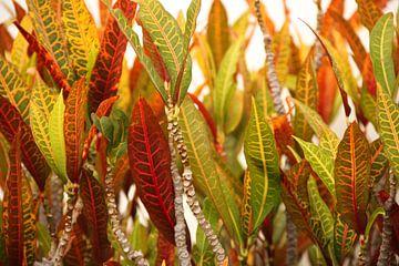 Vurige planten von Leanne de Blok
