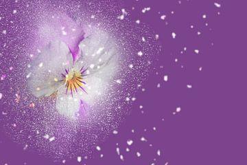 Blüten-Zauber mit lila Hintergrund sur Ursula Di Chito